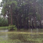 Flooding on US 90. Courtesy of UF Forecaster Deborah Alberto.