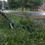 Tree down on UF campus. Courtesy of WUFT-TV News.