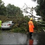 Tree down on SW 13th St, Gainesville. Courtesy of The Florida Alligator.