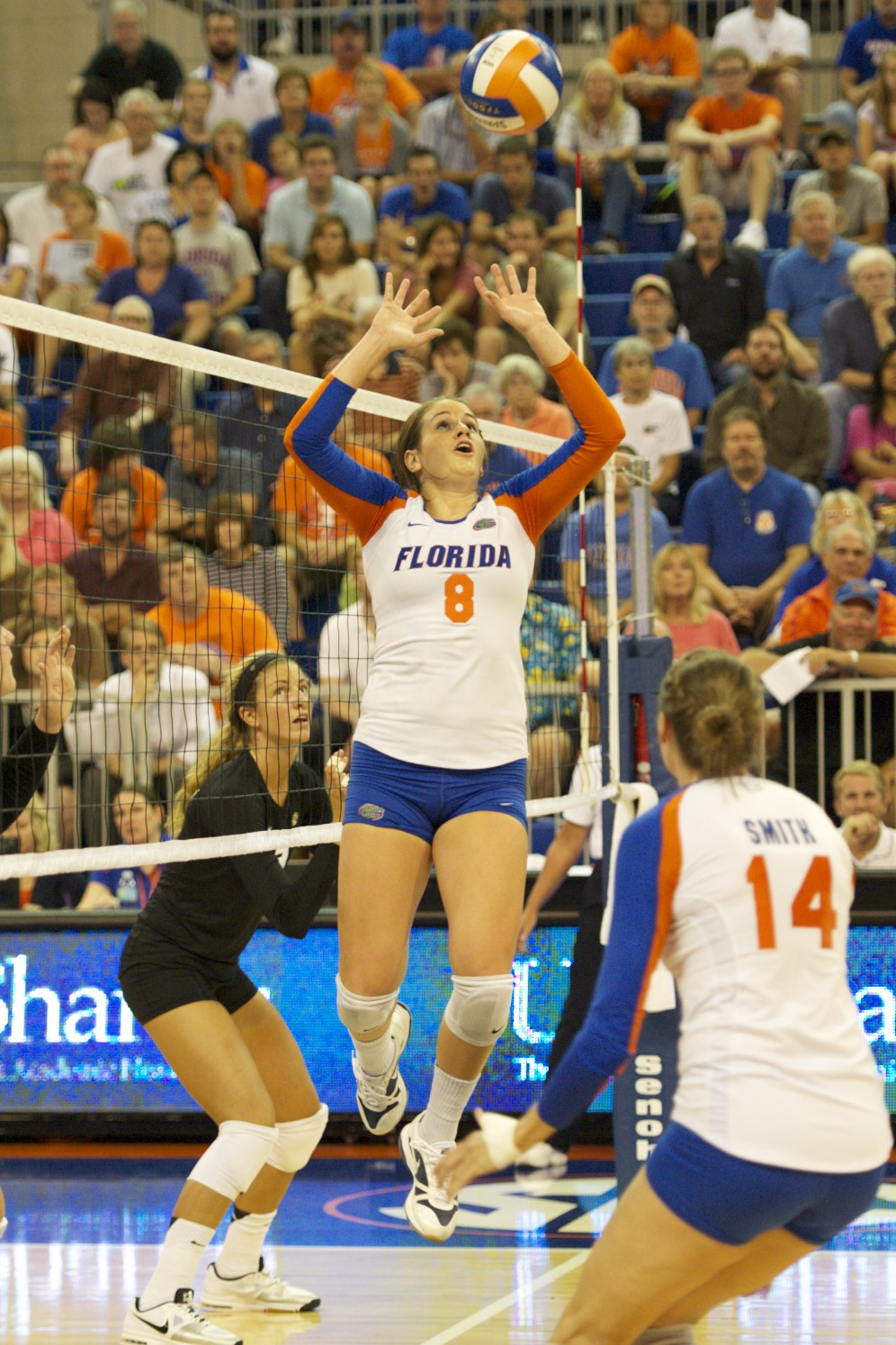 Number 8 of the Florida Gators, Taylor Brauneis, sets her teammate in hopes of a kill for her team.